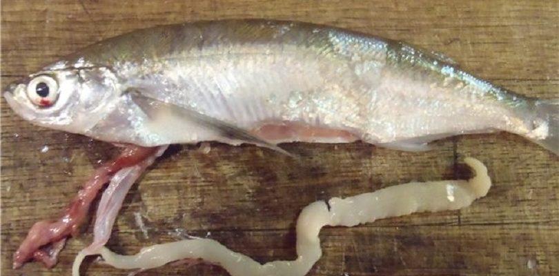 больная рыба