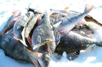 рыба на снегу