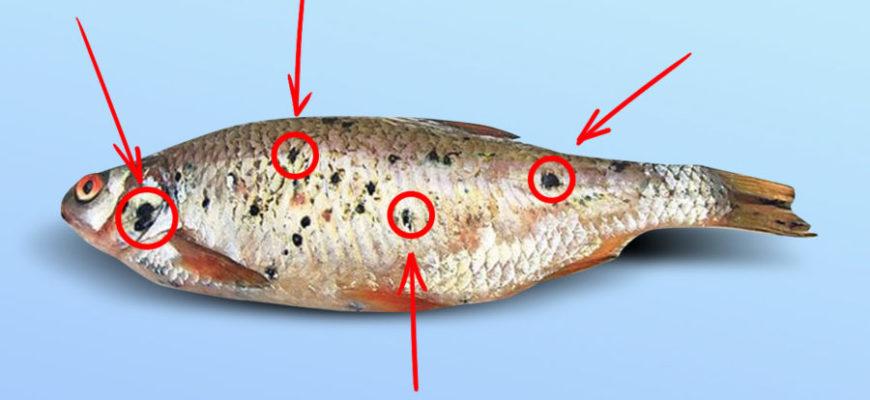 рыба с черными точками