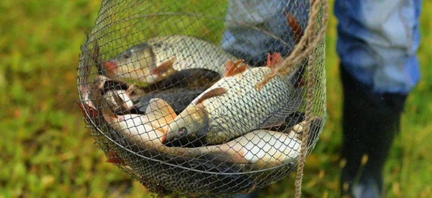 садок с рыбой